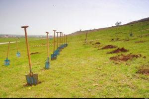 Tehnica plantarii