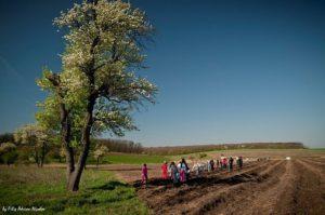 Plantare Draganesti Vlasca