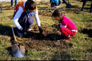 Padurea copiilor