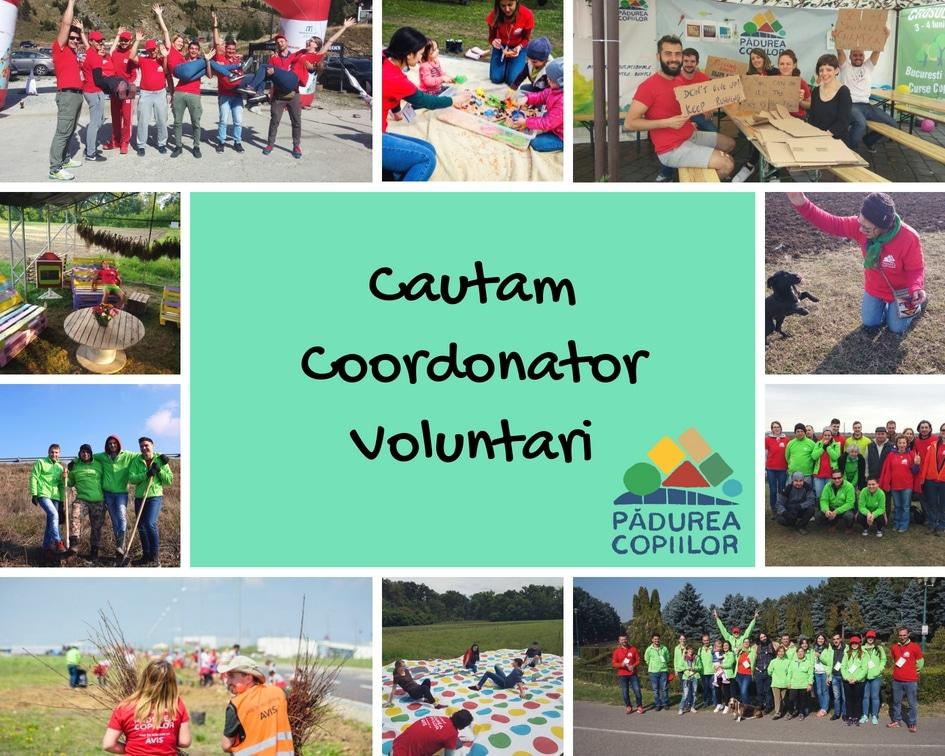 Căutăm coordonator de voluntari